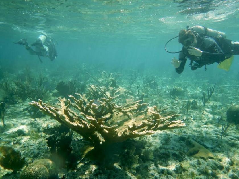 Gator Halpern inspects a coral reef
