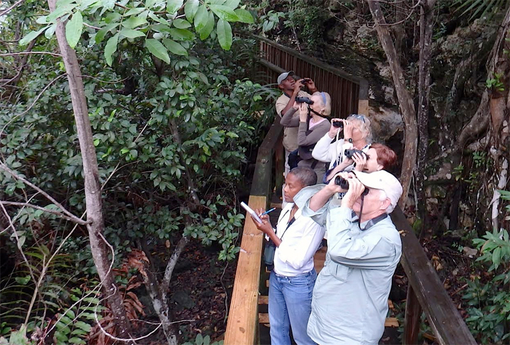 Bird counting in Grand Bahama